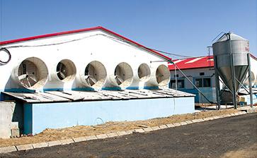 商品猪养殖基地